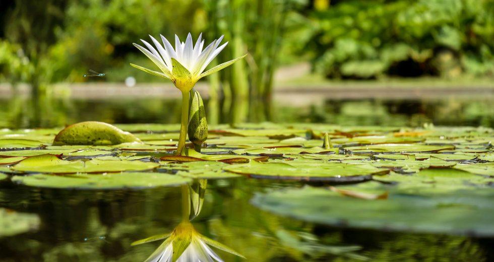 Już w piątek otwarcie nowego ogrodu botanicznego w gminie Mielno.