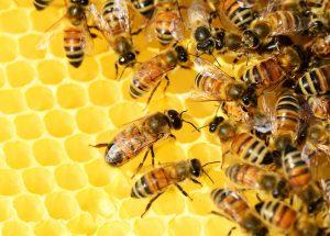 W trosce o rodziny pszczół